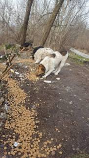 Strassenhunde2