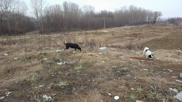 Strassenhunde3